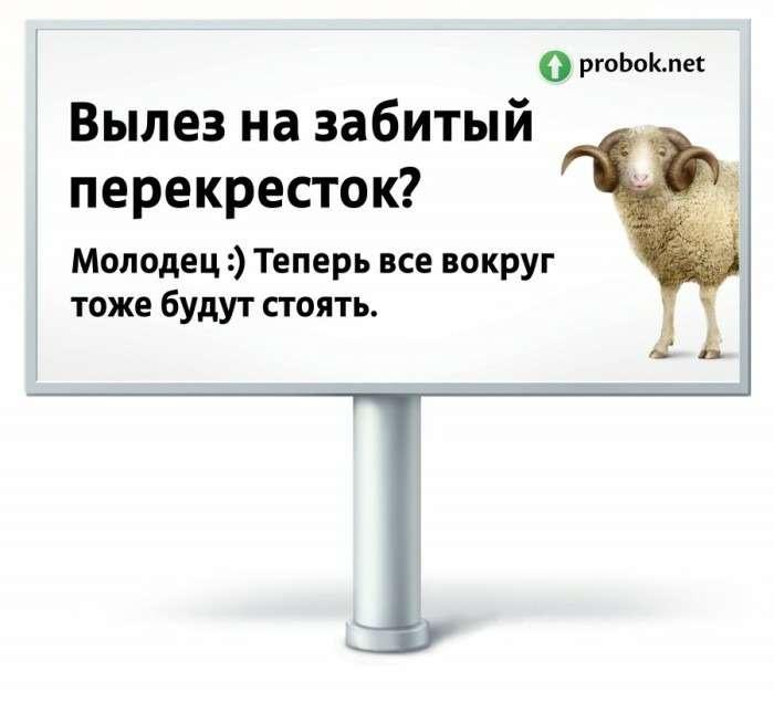 Водителей-хамов будут высмеивать наплакатах