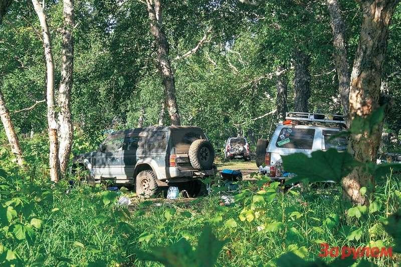 В буйной зелени леса лагерь можно ставить смело— змеи наКамчатке не водятся.