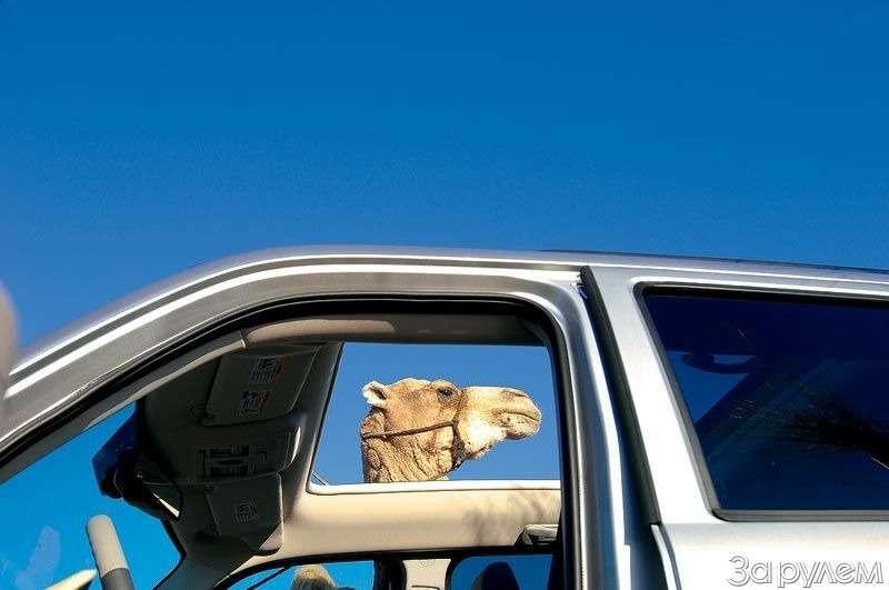 Подбелым солнцем пустыни— фото 79470