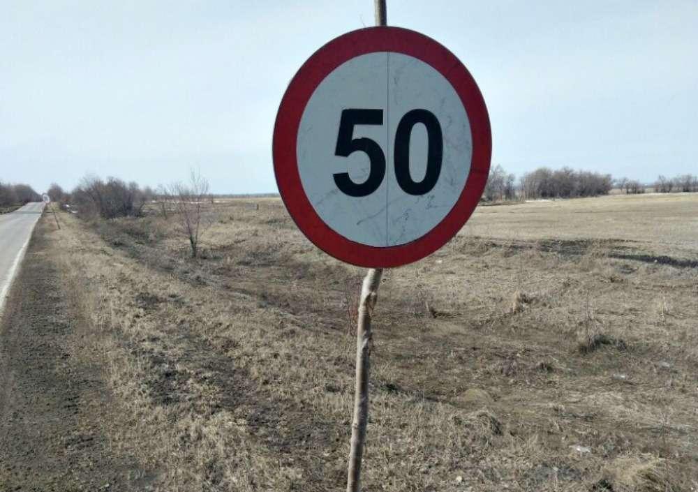 Дорожные знаки наспиленных ветках. Экономия или шутка?— фото 863110