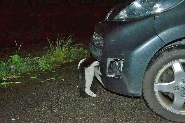 Котпережил удар автомобиля наскорости 120 км/ч