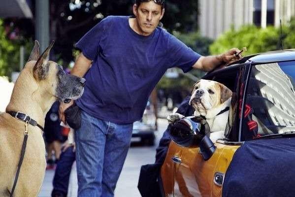 nocopyright The Bulldog isback   the new MINI iscoming (1)