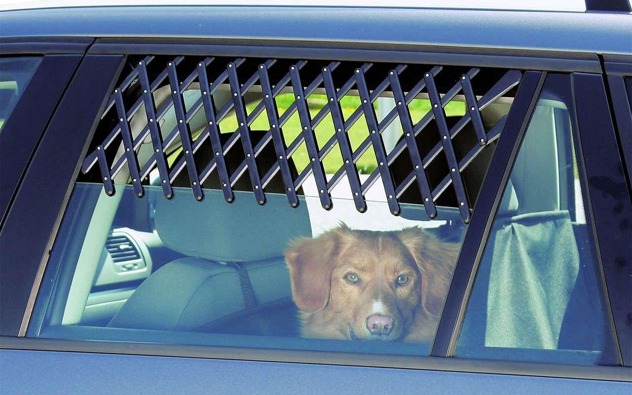 Ваша собака пролает «спасибо»: 13полезных штук дляпутешествий— фото 987719