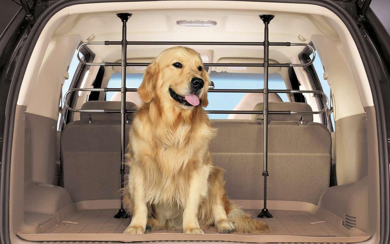 Подвижный груз— как правильно перевозить домашних животных— фото 773086