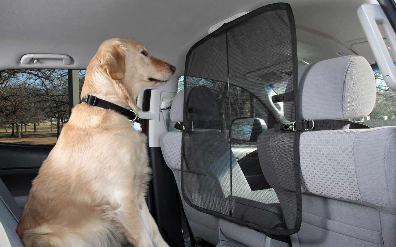 Подвижный груз— как правильно перевозить домашних животных— фото 773089
