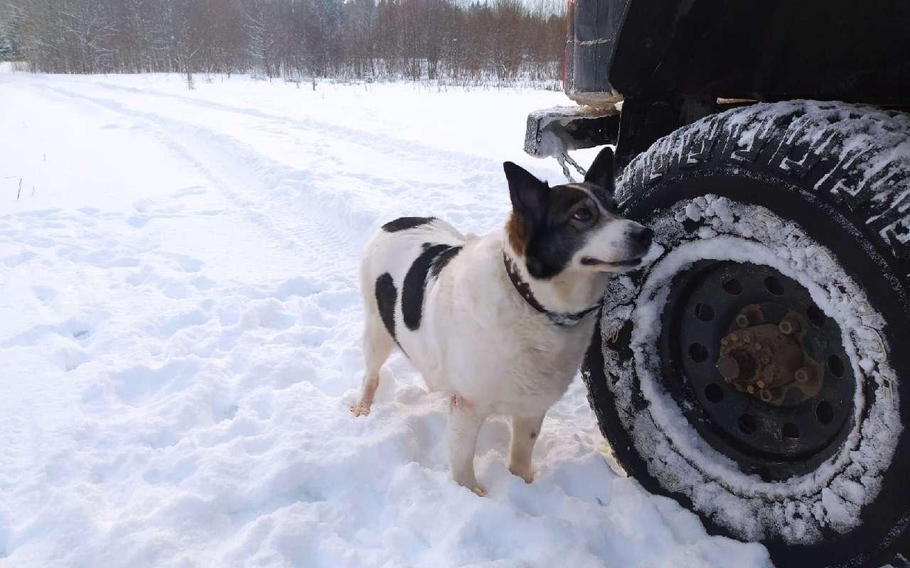 УАЗобъявил перепись собаководов— фото 1222216