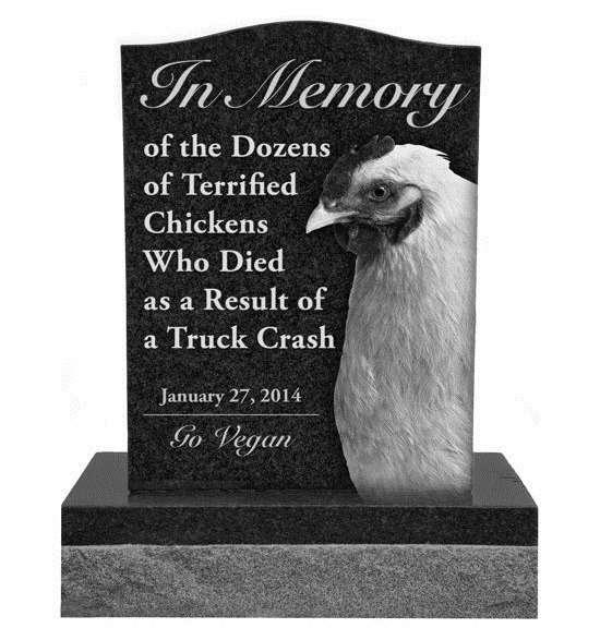 Памятник погибшим вДТП курам хотят установить защитники прав животных
