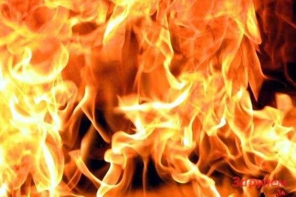 Химкинский лес. Поджог техники