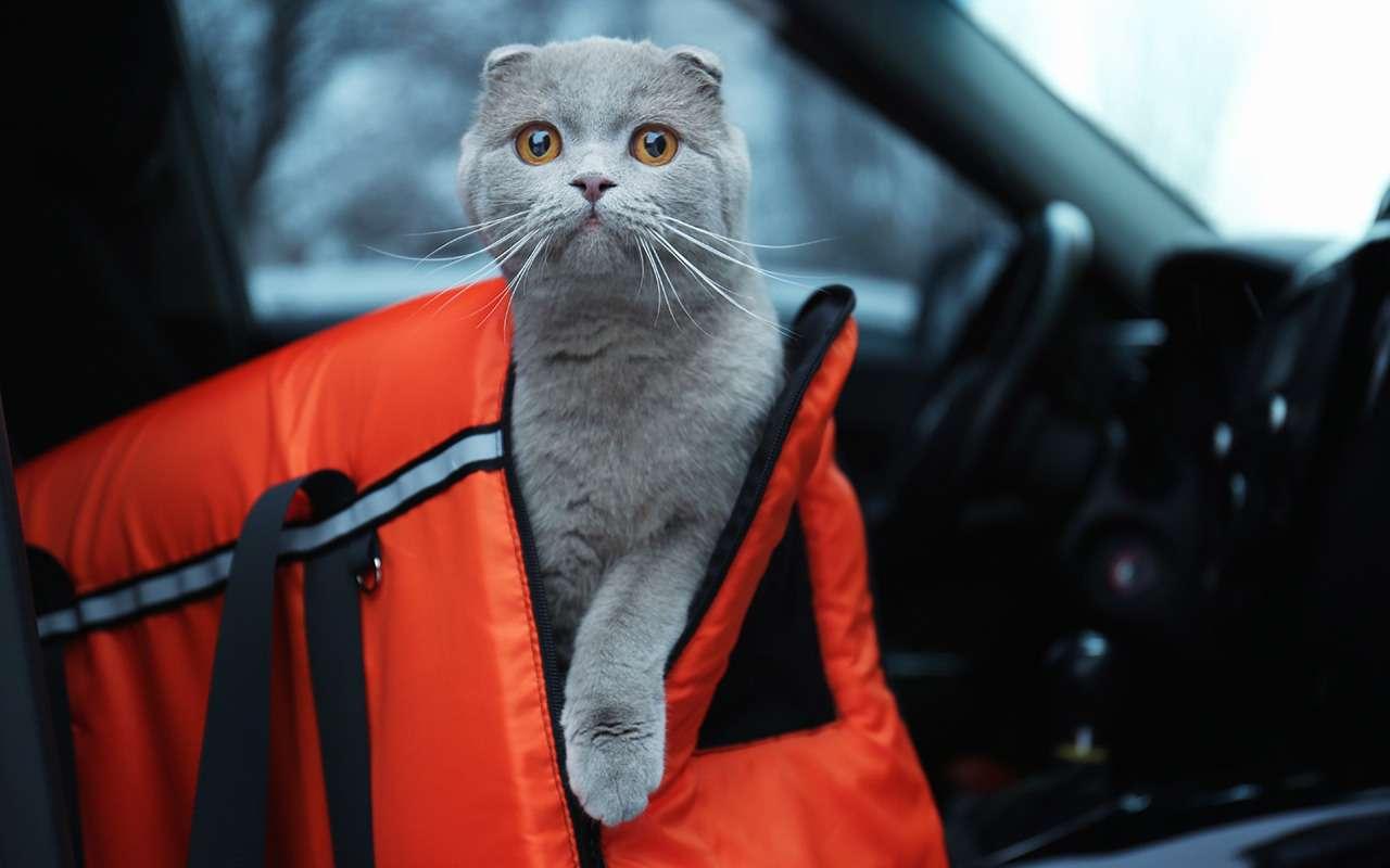 Безопасная перевозка животных вавтомобиле: 10простых правил— фото 978668