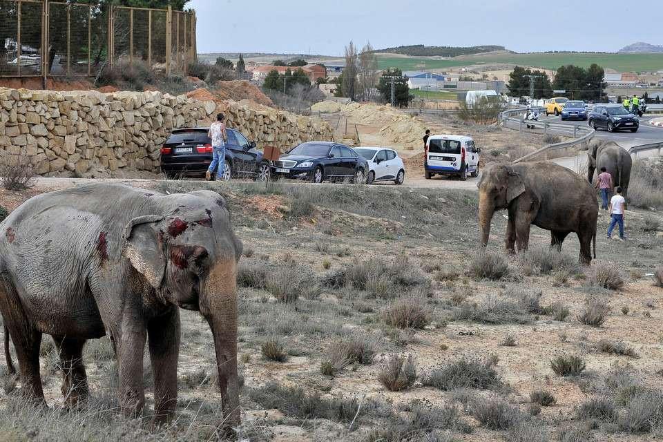 Спасти рядового слона. Несамое обычное ДТП— фото 859419