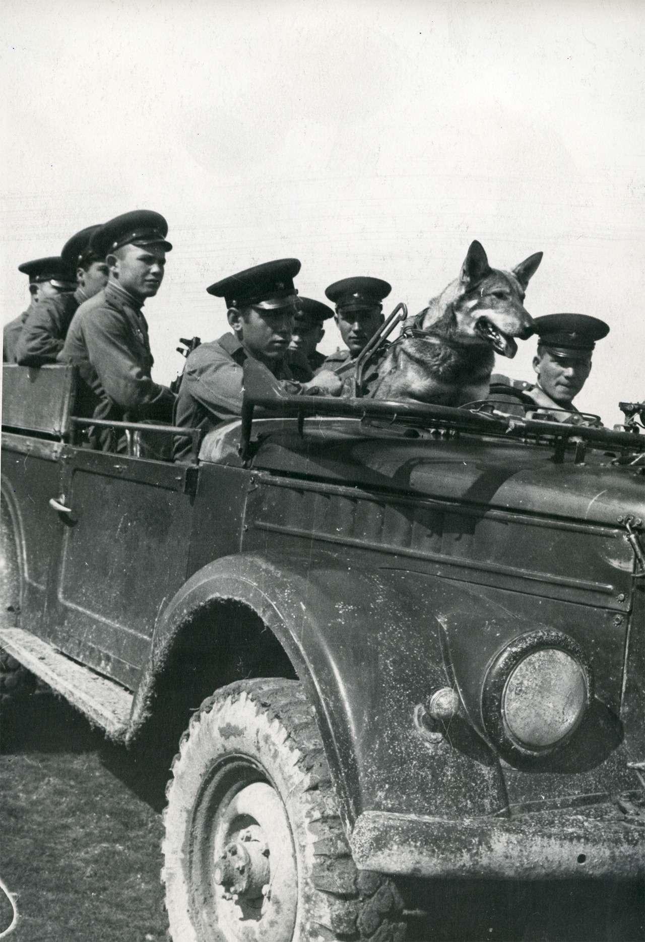 Парадные иповседневные: легковые автомобили Советской Армии— фото 846560