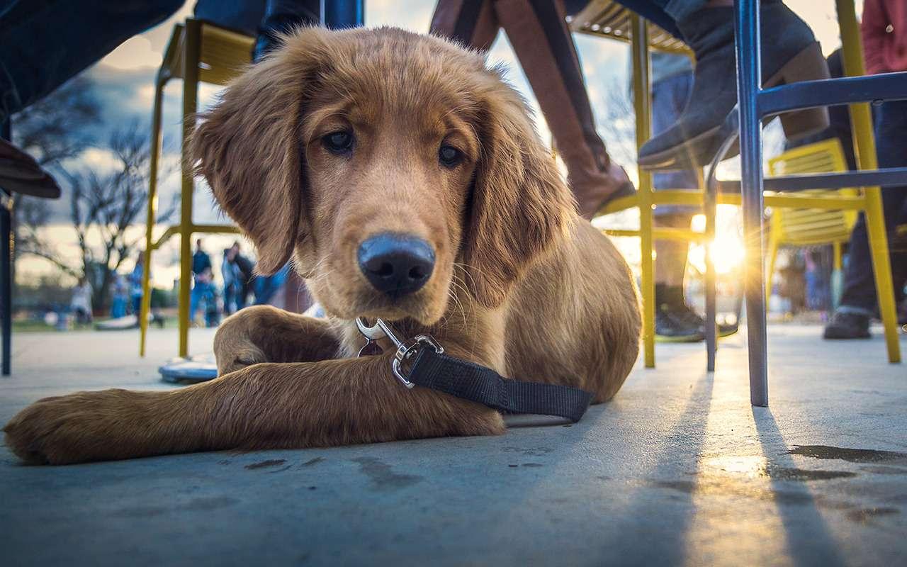 C животными вотель, кафе, магазин: все «можно» и«нельзя»— фото 1141838