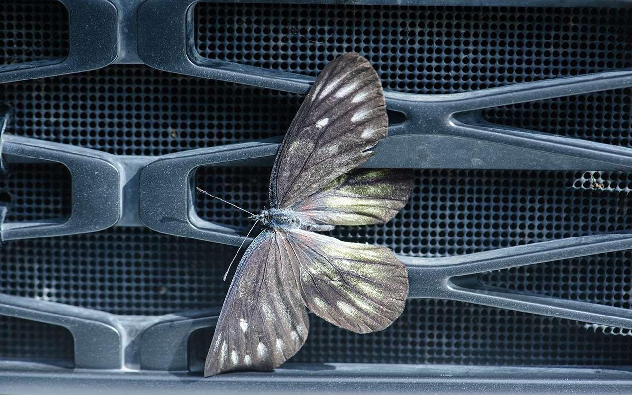 Наводим марафет. Боремся соследами насекомых накузове, битумными пятнами иостатками стикеров— фото 1272995