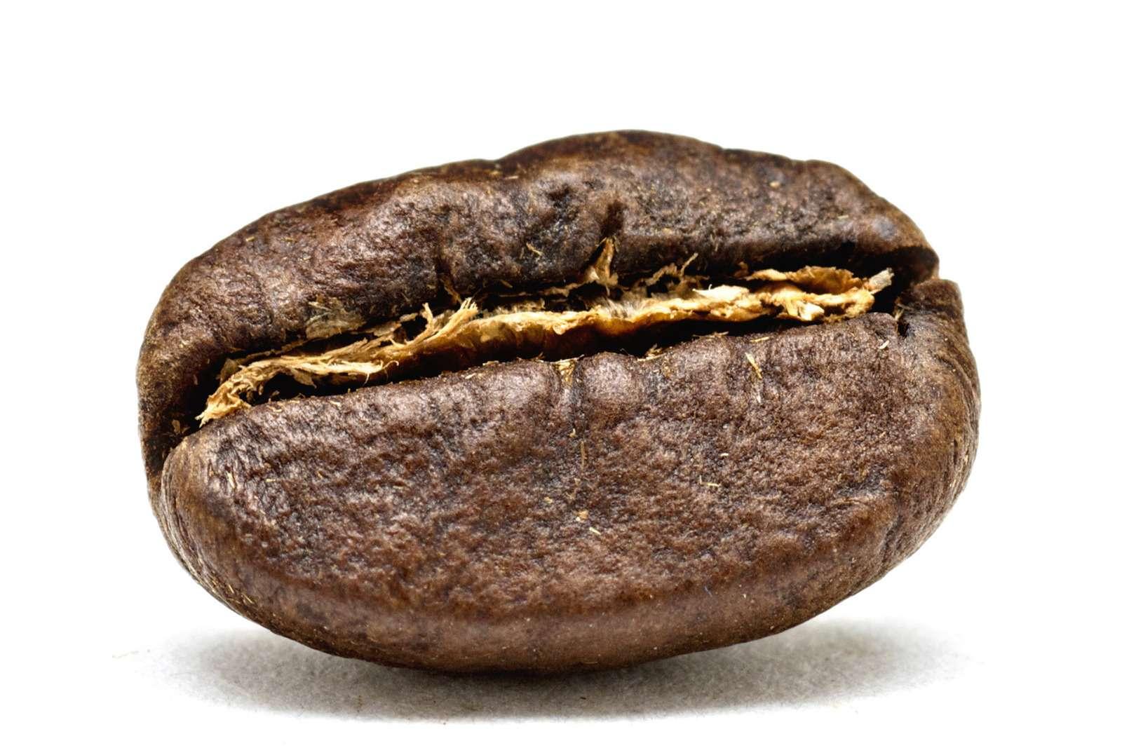 15_1kenya_coffee_bean