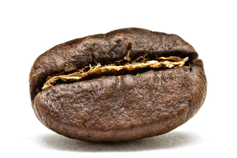 15_1kenya_coffee_bean