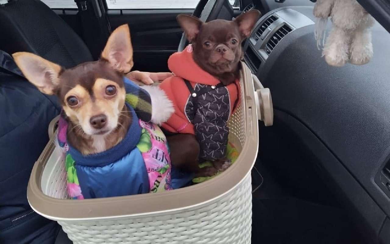УАЗобъявил перепись собаководов— фото 1222215