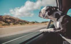 Собака вмашине: чем кормить икогда гулять