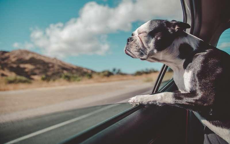 Собака вмашине: все заблуждения хозяев