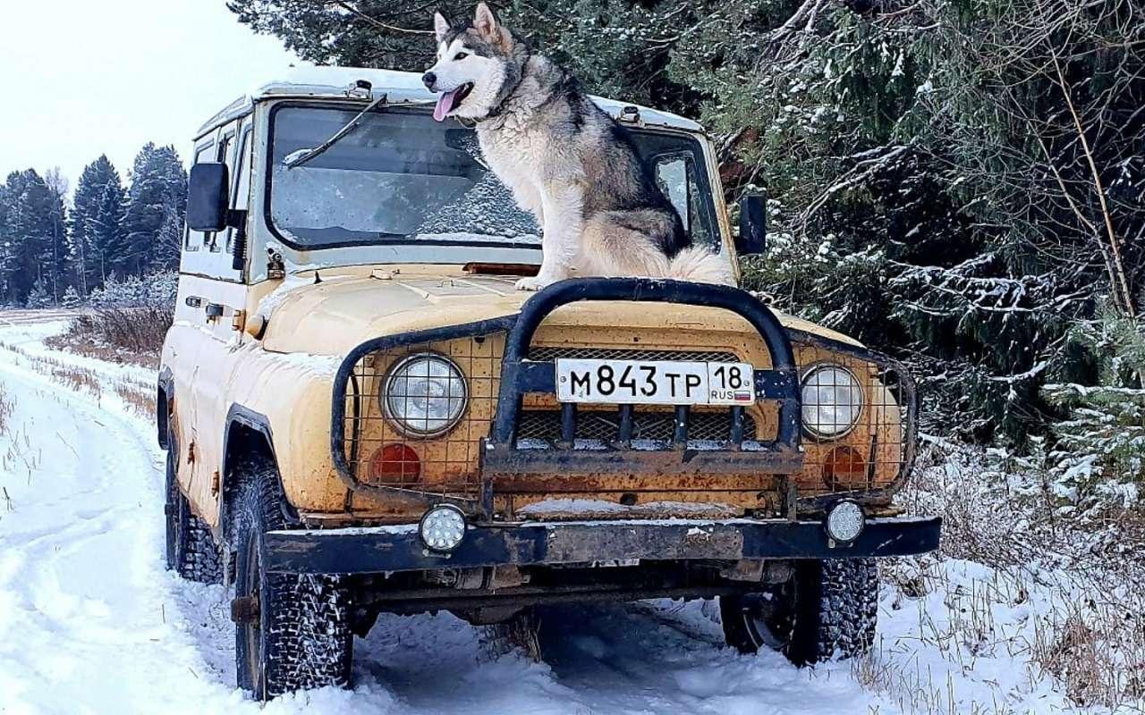 УАЗобъявил перепись собаководов— фото 1222218