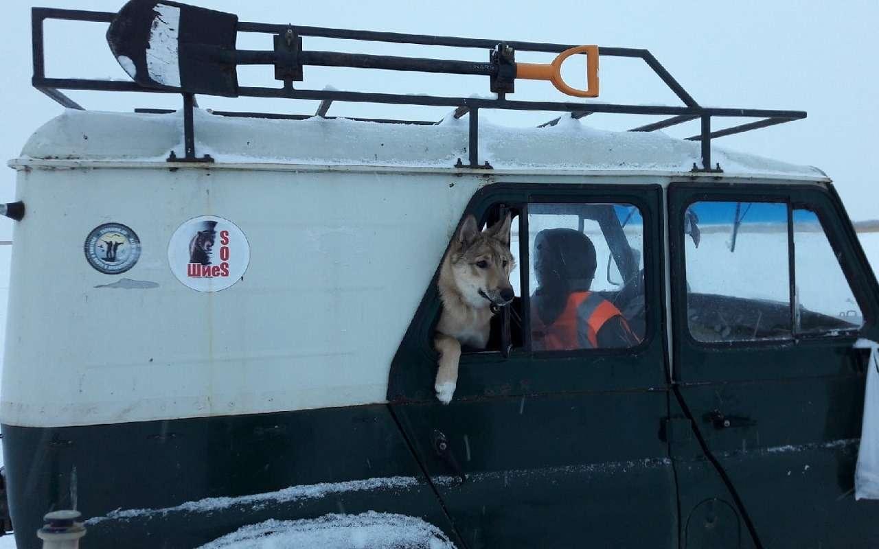 УАЗобъявил перепись собаководов— фото 1222214