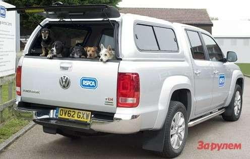 Volkswagen Amarok звери