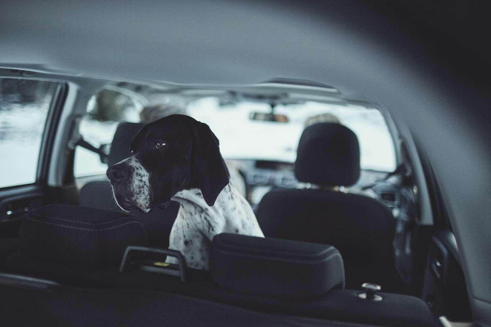 Обновленный  Subaru Forester: тише едешь...— фото 594336