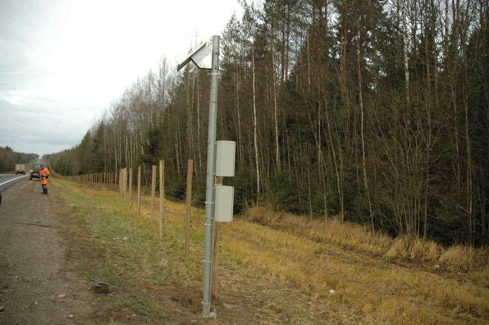 Нафедеральных трассах появляются «электропастухи»— фото 644670