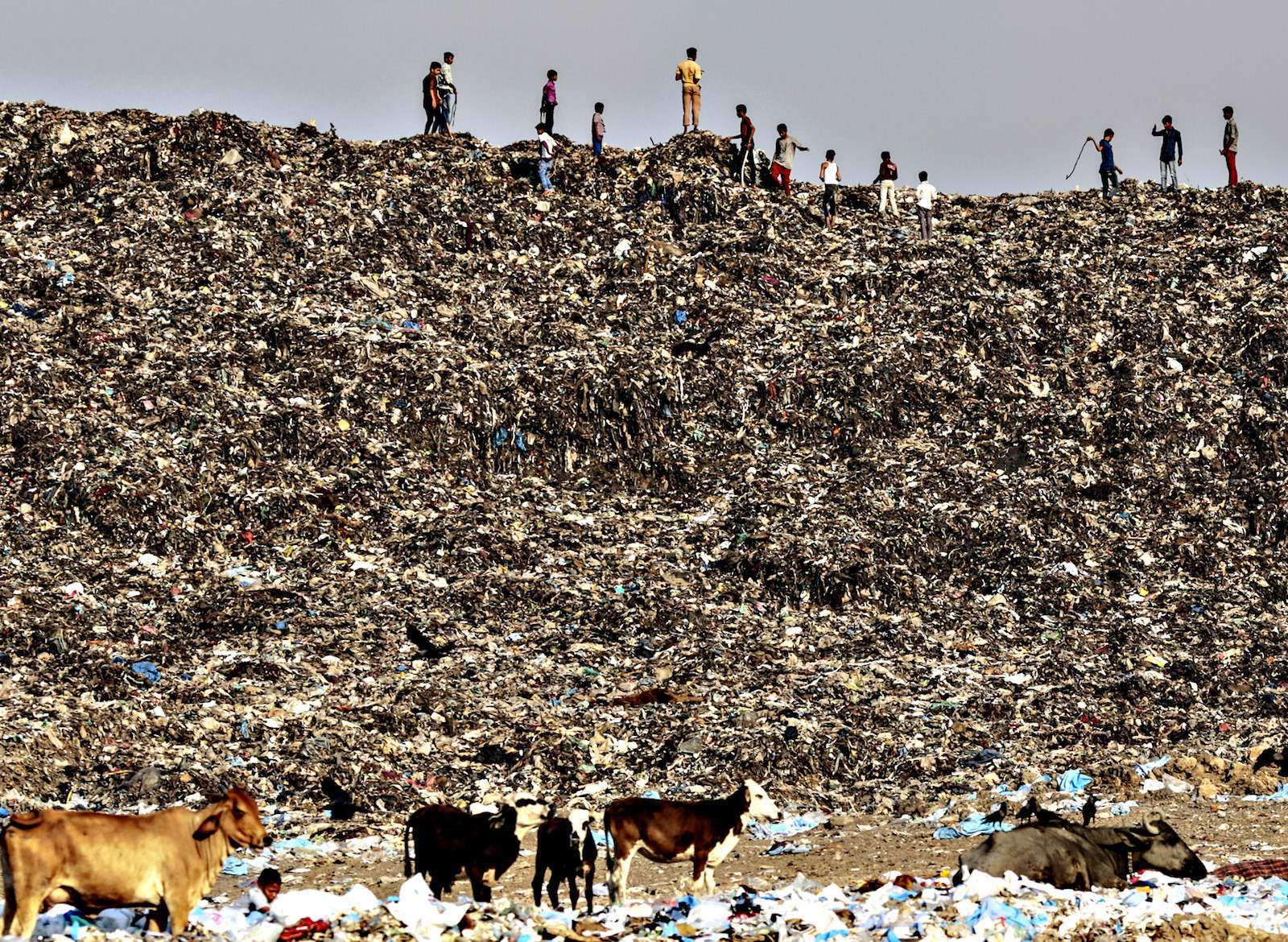Garbage AtThe Deonar Landfill Site AsTrash Mountain Rising inMumbai Swamps Modi 21st Century Vision...Boys play ascows graze through garbage atthe Deonar landfill site inMumbai, India, onWednesday, March 11, 2015. Mumbai isrunning out ofspace for its waste, and Deonar, Asia's oldest and largest dumpsite, isbursting. Each day, more than 500 trucks line upalong atwo-lane dirt road inaneastern suburb, waiting toadd toamountain ofrefuse tall enough tosubmerge the White House twice over