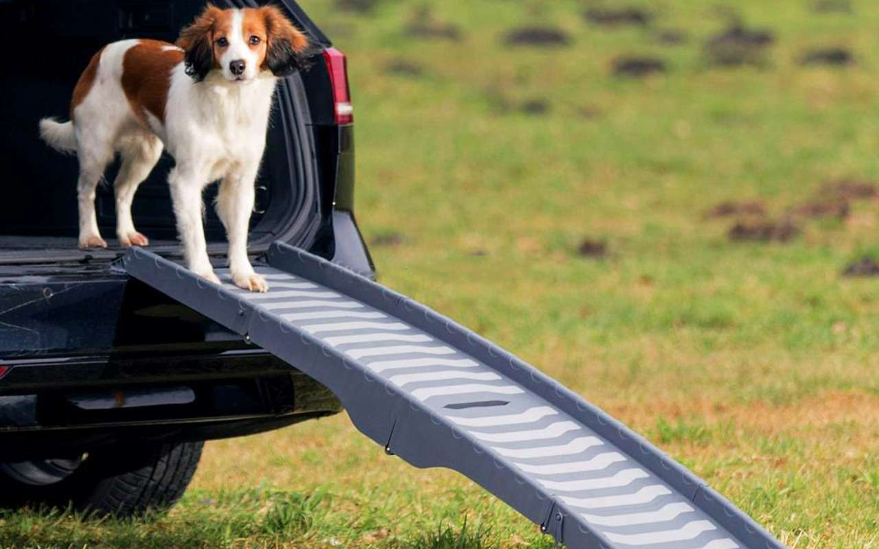 Ваша собака пролает «спасибо»: 13полезных штук дляпутешествий— фото 987723