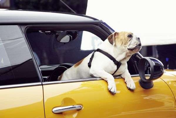 no copyright The Bulldog is back   the new MINI is coming (4)