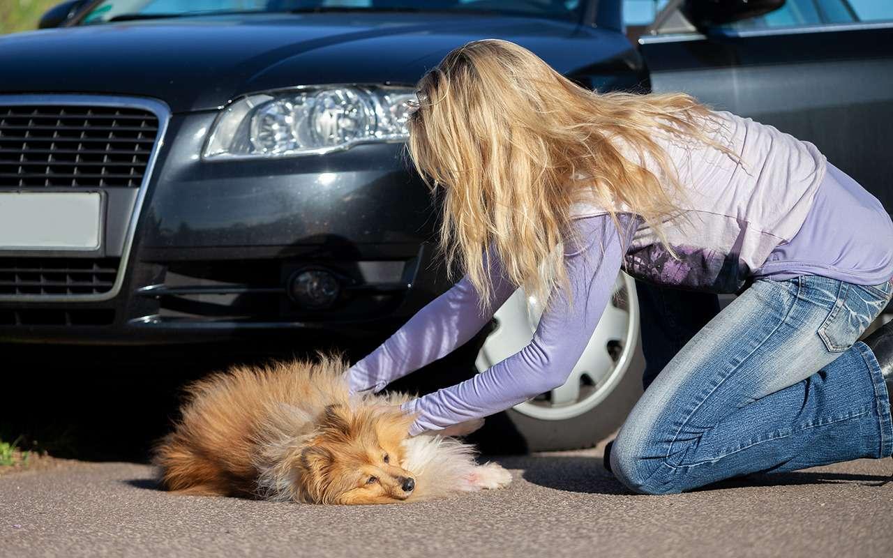 Сбил собаку— разруливаем ситуацию за4шага— фото 1218105