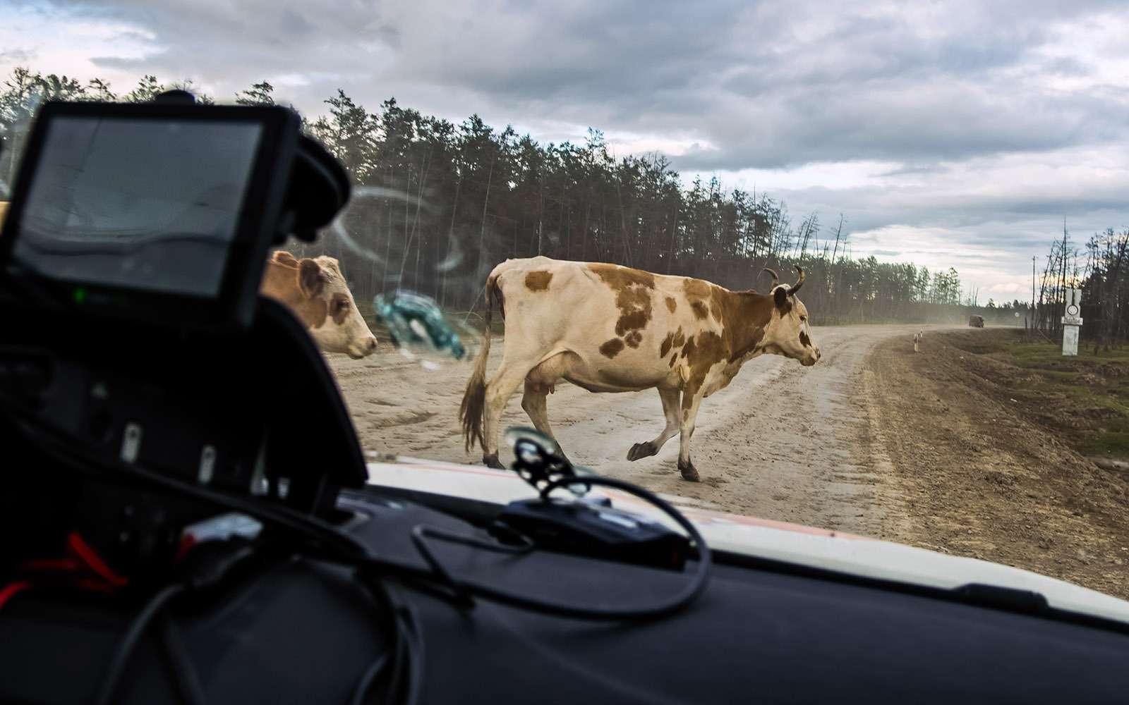 Тряска накостях: ужасы икрасоты трассы «Колыма»— фото 670352