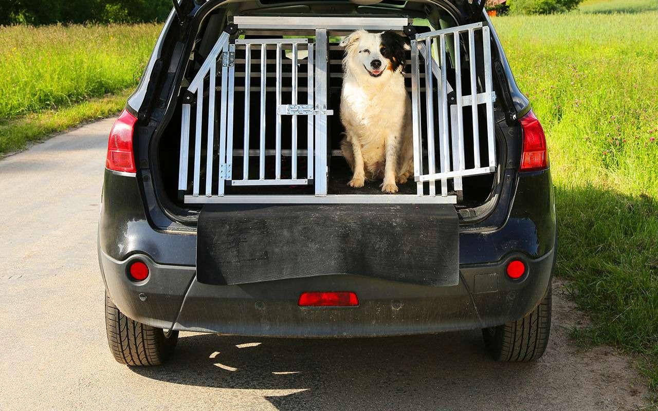 Ваша собака пролает «спасибо»: 13полезных штук дляпутешествий— фото 987718