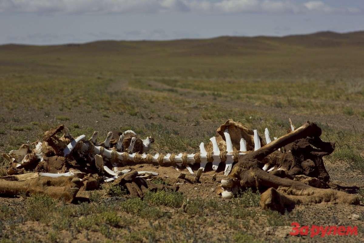 Прошлой зимой 10000000 голов скота замерзло впустыне. Наулице было— 50градусов поцельсию. ВМонголии осталось лишь 50000000 голов скота.