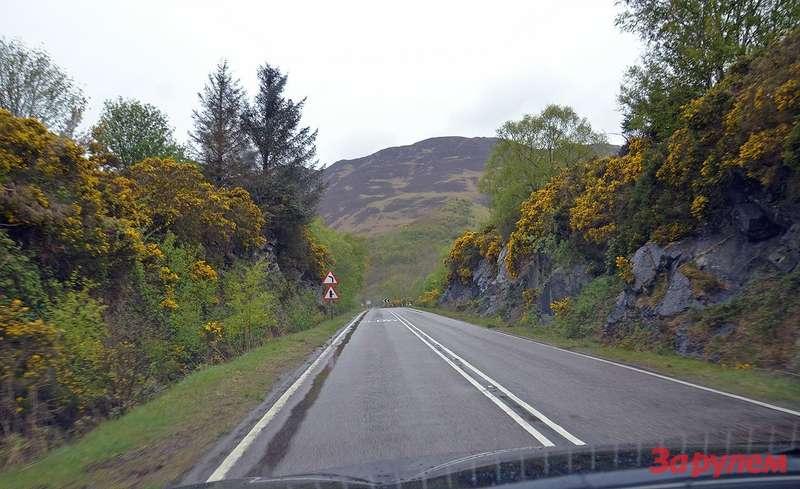 Поберегам дороги растут кусты Gorse bush