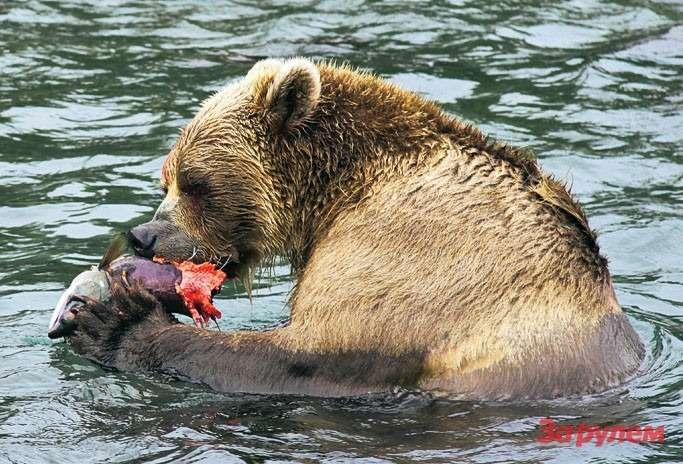 Рыбку мыкушаем только сживота, там, где икорка.