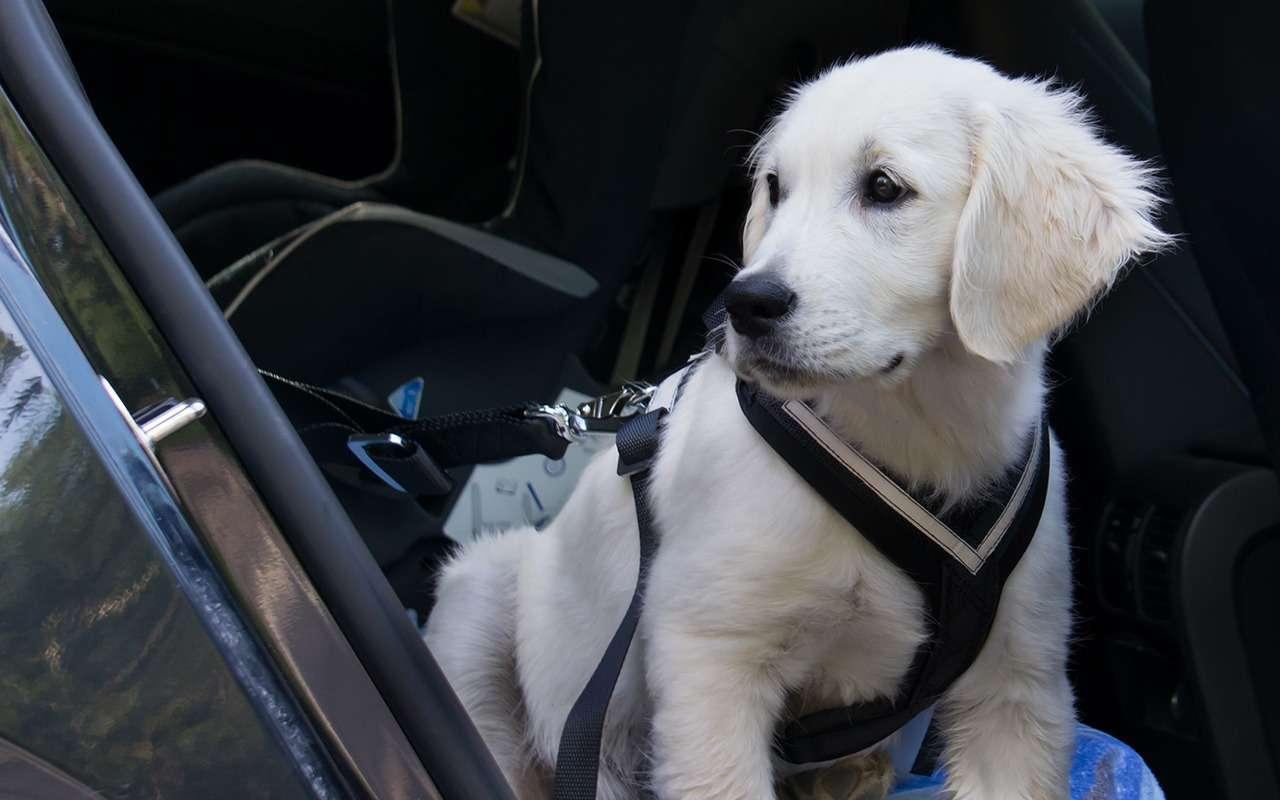 Ваша собака пролает «спасибо»: 13полезных штук дляпутешествий— фото 987720
