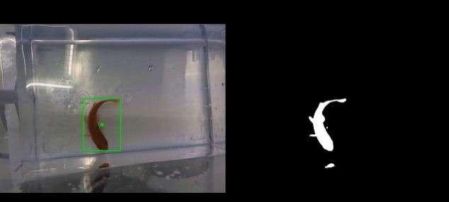 Команда голландских исследователей разработала аквариум насамоходном шасси, которым смогут управлять сами рыбы, таким образом аквариумные рыбки будут способны сами путешествовать поквартире