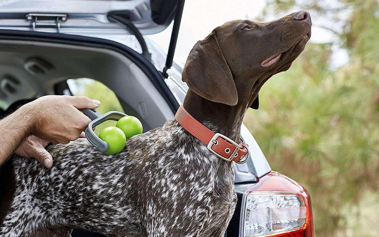 Ваша собака пролает «спасибо»: 13полезных штук дляпутешествий— фото 987724