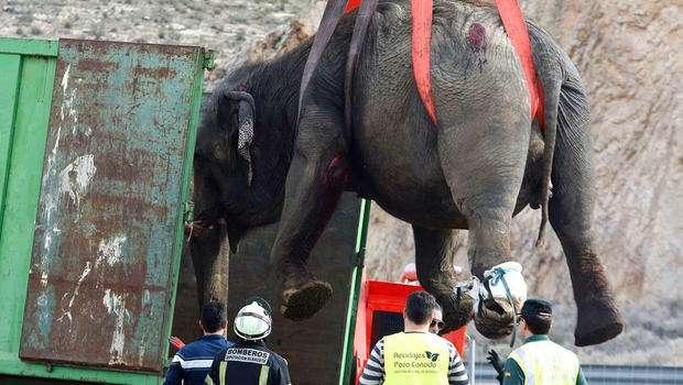 Спасти рядового слона. Несамое обычное ДТП— фото 859417