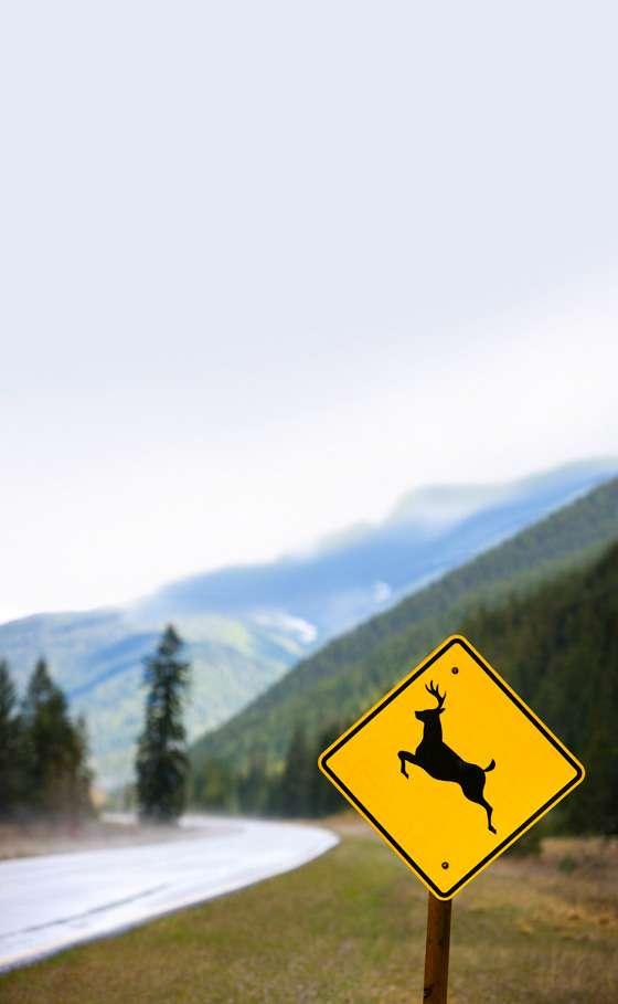 Deer crossing sign inIdaho.