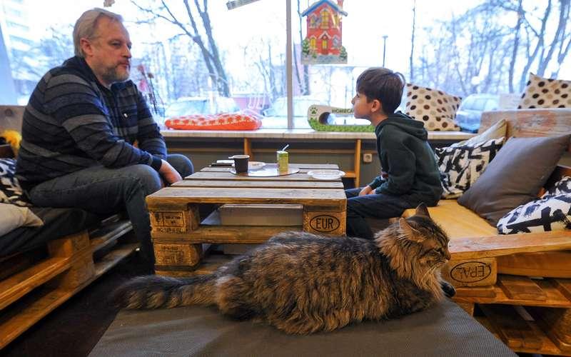 C животными вотель, кафе, магазин: все «можно» и«нельзя»
