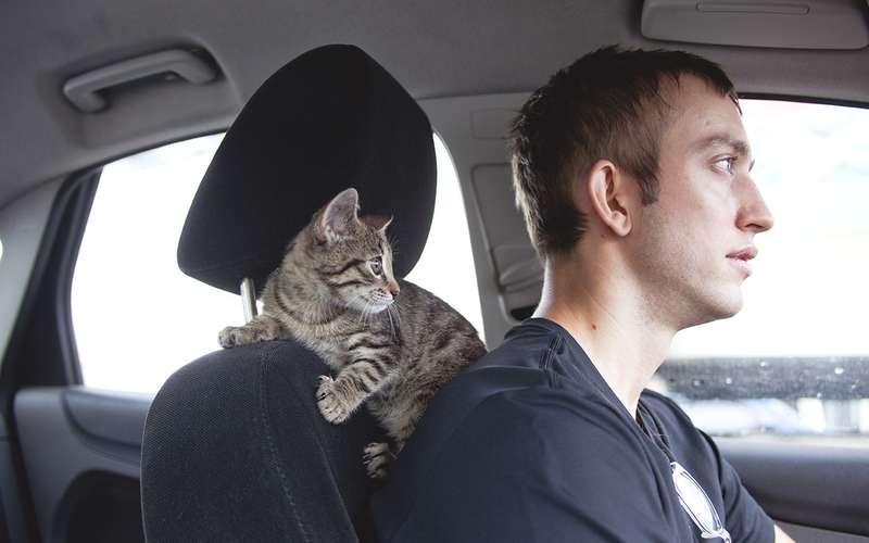 Мывезем ссобой кота: 3«не навреди»
