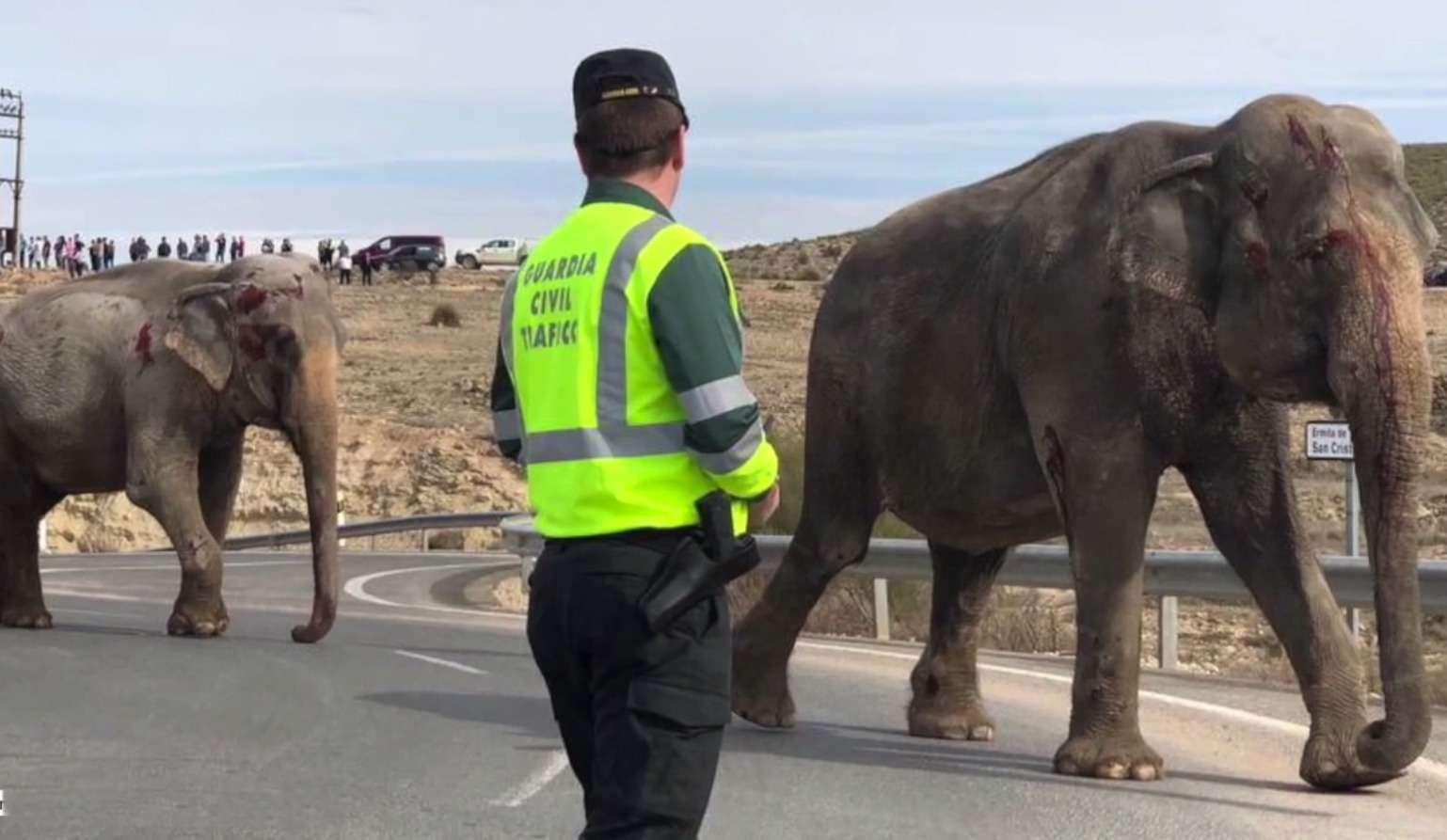 Спасти рядового слона. Несамое обычное ДТП— фото 859418