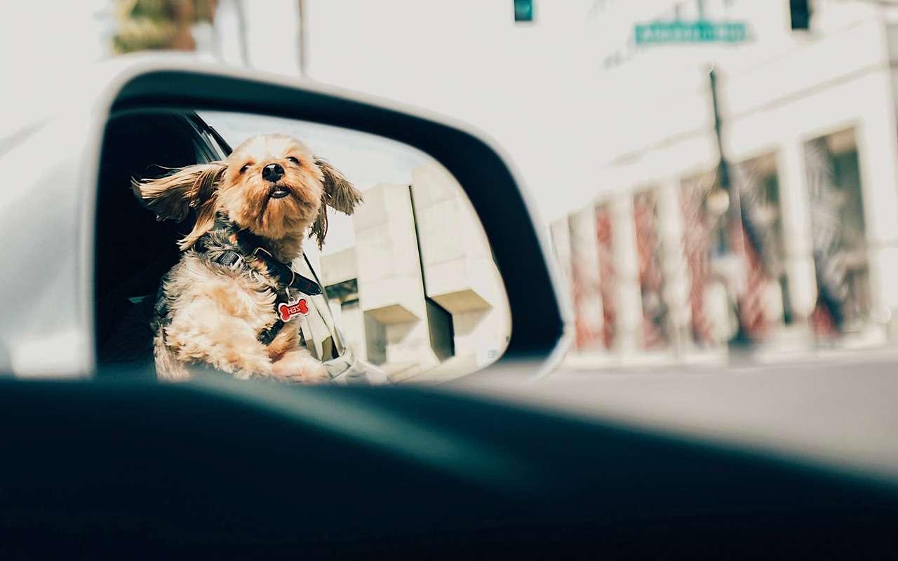 3 повода докопаться: сотрудник ДПС увидел собаку вмашине— фото 1091949