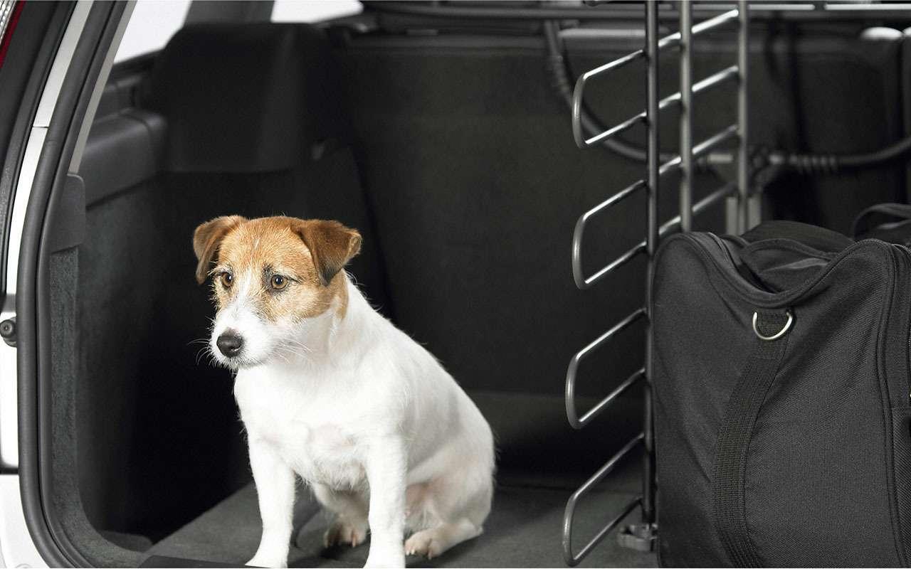 Подвижный груз— как правильно перевозить домашних животных— фото 773087