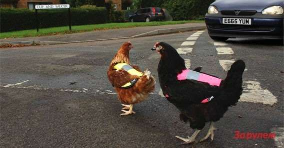 Keep hens safe inthe dark