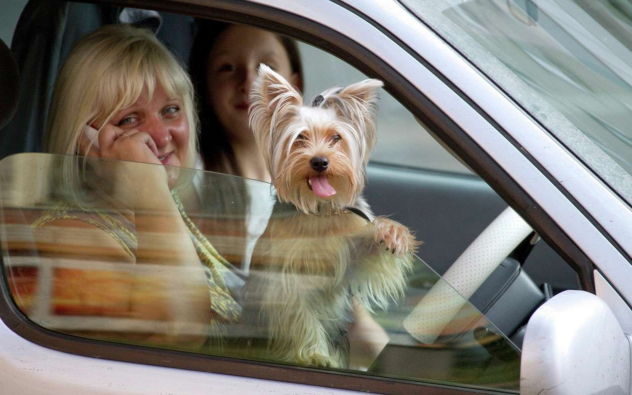 Подвижный груз— как правильно перевозить домашних животных— фото 773081
