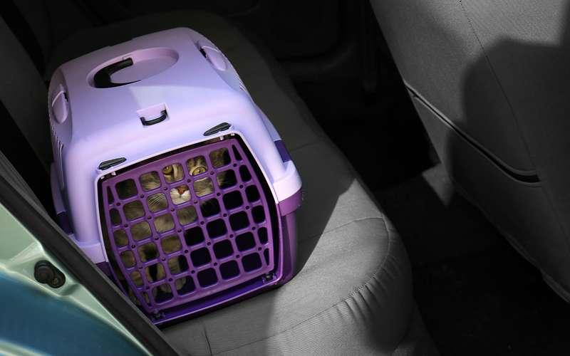 Каквозить кота (собаку, рыбку...) надачу— советы ветеринаров