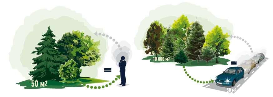 Полсотни квадратных метров леса нейтрализуют углекислый газ отдыхания одного человека. Впробке наэтой жеплощади помещаются три легковые машины, источающие двуокись углерода всамом неэкономичном режиме. Получается, вырубка деревьев— порой логичный иразумный способ снизить выбросы парниковых газов.
